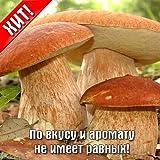 Portal Cool Steinpilz Boletus edulis Myzel Seeds 10G ????? ???? S0318