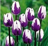 Toutes sortes de bulbes de tulipes belles fleurs de jardin sont appropriés pour les plantes en pot (il n'est pas une graine de tulipe) bulbes 2PC 2...