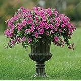 100pcs mezclaron las semillas de flor de la petunia 8 diferentes tipos de Petunia para seleccionar fácil de cultivar para el Hogar Jardín Claro