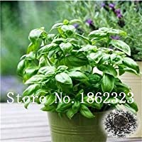 20 Samen//bag 100/% reale authentische chinesische stachelige Asche Pfeffer im Freien Garten Gesundheit chinesischen Ursprungs Chili Baumsamen Gew/ürze Pflanzen 1