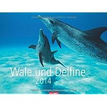 Wale und Delfine 2014