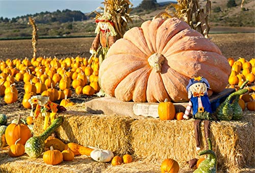 nyl Foto Hintergrund Ernte Feld Kürbis Halloween Herbst Vogelscheuche Fotografie Hintergrund für Fotoshooting Portraitfotos Party Kinder Fotostudio Requisiten ()