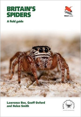 britains-spiders-a-field-guide-wildguides
