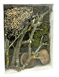Lucky Reptile LDS-02 Life Experience Deco Set Jungle, Dekoration aus Naturmaterialien für Nano Feuchtterrarien