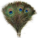TININNA 50 pcs plumas del pavo , Natural Las plumas del pavo real retro hermosa 10-12 pulgadas de largo.