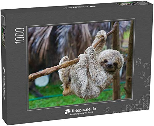 Puzzle 1000 Teile Sloths im Rettungszentrum in Costa Rica San Jose - Klassische Puzzle, 1000/200/2000 Teile, in Edler Motiv-Schachtel, Fotopuzzle-Kollektion 'Tiere'