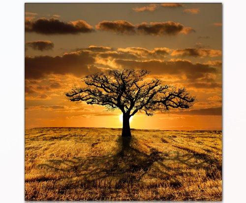 DEINEBILDER24 - Wandbild XXL Baum 80 x 80 cm auf Leinwand und Keilrahmen. Beste Qualität, handgefertigt in Deutschland!