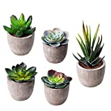 HB life 5 Pezzi Succulente Artificiali Pianta Artificiale Vaso Piante Finte vasi Piante Fiori Artificiali da Interno Esterno Decorazioni per Soggiorno