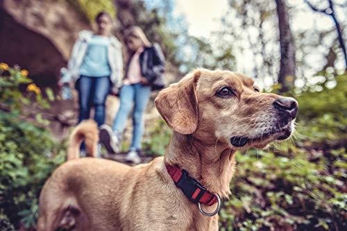 Jochen Schweizer Geschenkgutschein - Kurzurlaub mit Hund