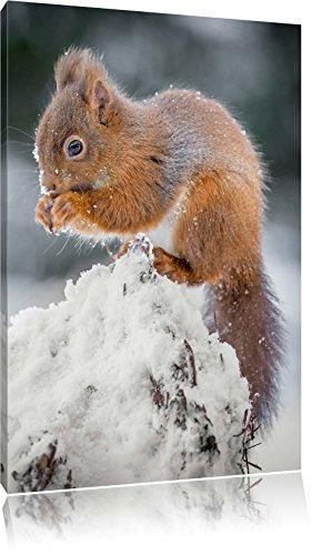 kleines-eichhrnchen-im-winter-format-80x60-auf-leinwand-xxl-riesige-bilder-fertig-gerahmt-mit-keilra