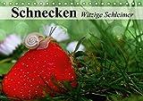Schnecken. Witzige Schleimer (Tischkalender 2018 DIN A5 quer): Unsere lustigen Gesellen im Garten- und Blumenbeet (Monatskalender, 14 Seiten ) ... [Kalender] [Apr 01, 2017] Stanzer, Elisabeth