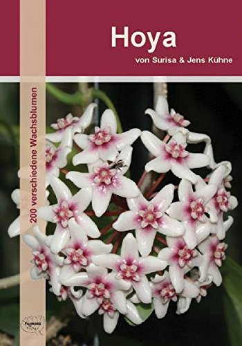 hoya-200-verschiedene-wachsblumen