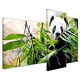 Wandbild - Pandabär - Bild auf Leinwand 130x80 cm 3 teilig - Leinwandbilder Bilder als Leinwanddruck Tierbild Wildtiere - bedrohte Tiere - China
