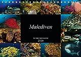 Malediven - Die bunte Unterwasserwelt (Tischkalender 2019 DIN A5 quer): Tauchen Sie ein in eine bezaubernde Unterwasserwelt (Monatskalender, 14 Seiten ) (CALVENDO Natur)