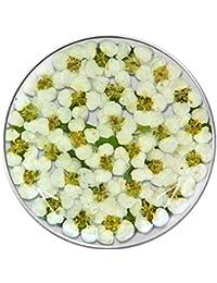 MY iMenso flores insignia vidrio mini flores blanco/verde 33 mm 33-1181