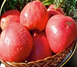 Samen Rosa Tomate Rozovyy Shelm Organisch gewachsen russische Erbstück NON-GMO