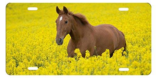 DQVWGK Tiere Bright Farbe Augen Face Fields Blumen Custom Aluminium License Plate Frames für Auto License Plate Cover mit 4Löchern Auto-Tag 15,2x 30,5cm