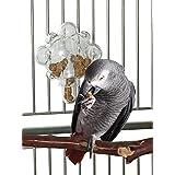 Creative Foraging Papagei-Futterspender / Spielzeug