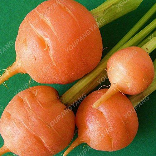 100pcs carotte Semences bio Hygiène de fruits Graines de légumes 25 sortes pour choisir douce et plante sain pour jardin Plantation Rose