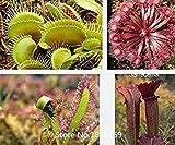 2016 Fleischfressende Pflanzen -100 Pitcher Pflanzen Samen Blumentopf Pflanzer im Freien Pflanzengarten Mix Farben