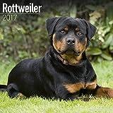 Rottweiler Calendar 2017 (Square)