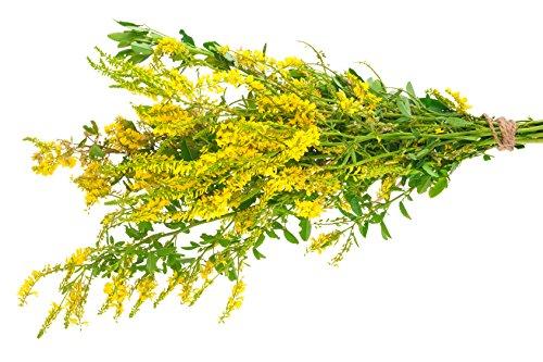 Echter Steinklee Melilotus officinalis 600 Samen