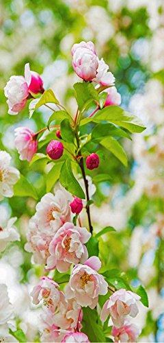 Banner - Thema: Frühling / Sommer - Kirschblütenzweig - 180cmx90cm - zum Hängen & Dekorieren