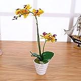 Künstliche Orchidee Gelb mit 2 Rispen 40cm I ECHT WIRKEND I Phalaenopsis Orchideen im Topf Kunstblume STAR-LINE®