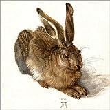 Poster 30 x 30 cm: Hase von Albrecht Dürer - Hochwertiger Kunstdruck, Kunstposter