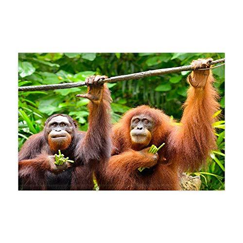 vrupi Wilde Tiere lustige Orang-utan affen Bad teppiche Tiere Freund mit grünen blättern im tropischen Dschungel duschmatte 15,7x23,6 Zoll fußmatte für wohnkultur Bad Boden Teppich