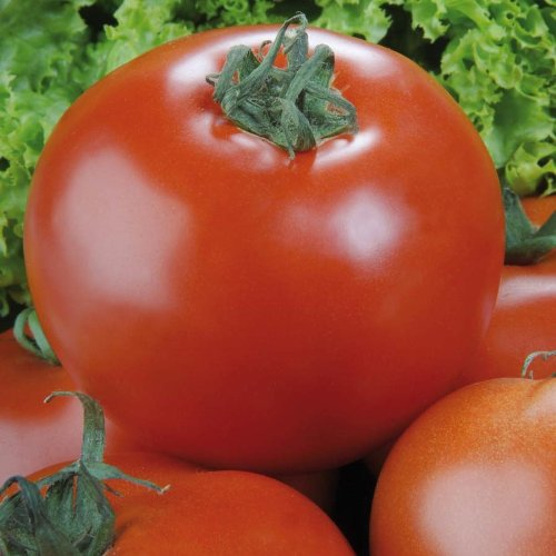 Tomaten 'Phantasia' F1,1 Portion