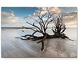 Eau Zone - Calze da Albero in Spiaggia, 120 x 80 cm