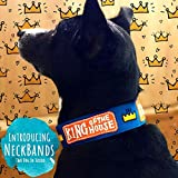 #8: That Dog In Tuxedo King of House Dog Neck Band Collar- an Alternative Dog Accessory for Dog Bandana (S)