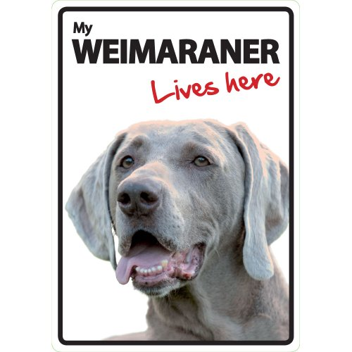Magnet & Stahl Zeichen, Weimaraner Lives Here -