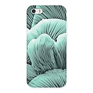 Special Shell of Ocean Back Case Cover for iPhone 5 5S