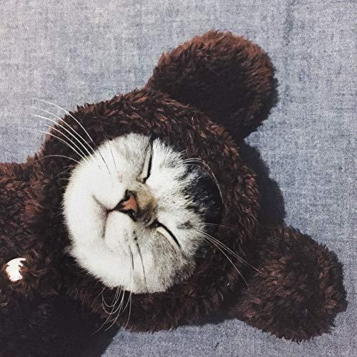 zhixing Katze Hund Braunbär Anzug Halloween Cosplay Kostüme Outfit Für Kleine Mittlere Große Andere Haustiere Kaninchen Pudel Bulldogge Pommerschen Corgi Kostüm (Braunbär Kostüm Ohren)