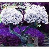 Shopmeeko 50 stücke Mix Farbe Bougainvillea Balkon Topf Hof Bonsai Blume Pflanze Immensly Auffällige Blühende Winterharte Kostenloser Versand Sementes: Weiß