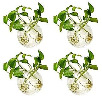 Nuptio Macetas de Vidrio para Colgar en la Pared Maceta para Plantas – Floreros para Plantar Agua Florero de Aire Terrarios para Plantas Contenedor para Plantas