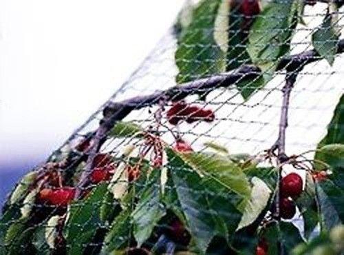 Garden Mile Anti Pájaro Estanque Malla Redes Protección Plantas Vegetales Fruta Jardín malla fina 4m x 5m