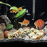 BELLE VOUS 130 Deko Muscheln - Haus Dekoration, Echte Seesterne Muscheln zum Basteln und Meeresschnecken, für Kerzenherstellung, Strand Motto-Party, Aquarium und Maritime Hochzeits-Deko - 5