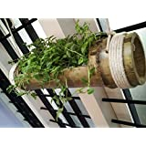 NAOE™ Hanging Planter Stand - Pale Yellow to Green - Wooden