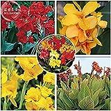 Pinkdose2018 heißer Verkauf importiert gemischte 5 Arten von Canna Blumen, Professional Pack, 5 Samen, tief rot gelb orange Hybrid bunte rote Farben E3990