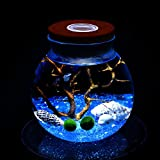 newdreamworld azul Marimo Acuario Kit con ORB jarra de cristal, bola de musgo, Azul Cristal Piedras, Mar Ventilador, seashells-miniature bajo el agua vida para oficina escritorio Decor