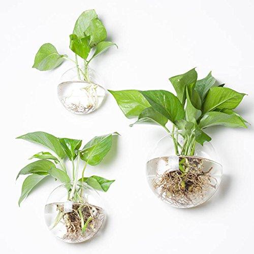 Parete bubble terrariums, set di 3ciotola in vetro da parete per interni vasi da parete, vaso per piante fiori secchi air living decorazione da parete per soggiorno e camera da letto