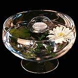Runde Glas-Schale Roxy 75 Höhe 11cm ø 17cm. Flache Glasschale auf Fuß mit Dekoration Gerbera weiß Deko-Schale von Glaskönig