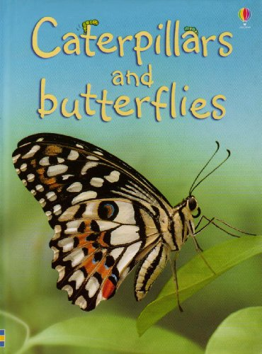 caterpillars-and-butterflies-beginners