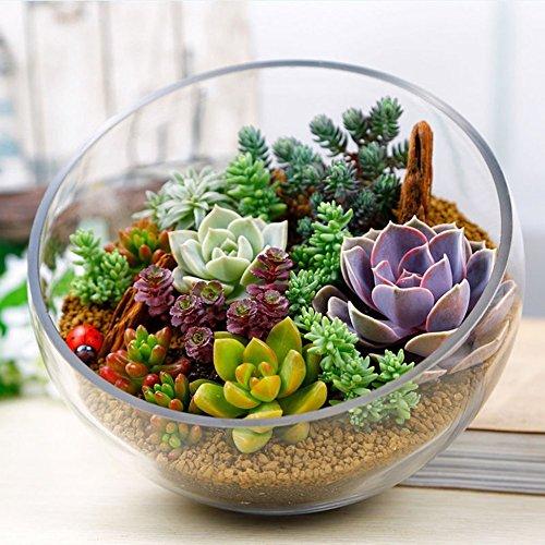 Dewin Sukkulenten Samen - Mix Sukkulenten Samen, seltene Sukkulenten Topfpflanzensamen, für Haus und Garten, Blumentöpfe, 100PCS
