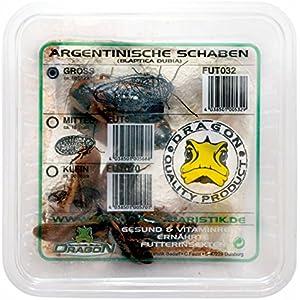 Argentinische Schaben groß ca. 10Stk Dose - Futtertiere - Reptilienfutter - Futterinsekt
