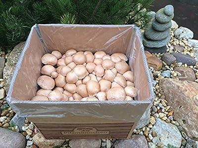 XXL Bio Steinchampignon, komplettes Pilzzuchtset für die eigene Pilzzucht von Pilzmännchen - Du und dein Garten