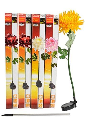 Lot 3 Chrysanthemes Solaire Rose Automatique 75,5cm